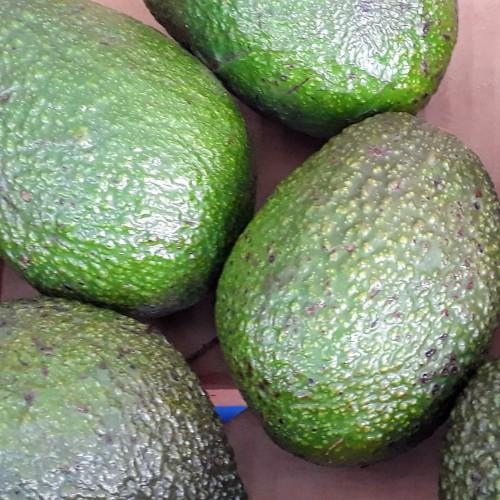 Avocado Hass  (each)